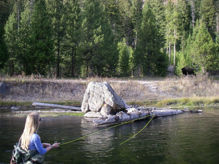 Ail Fitzgerald fishing the Madison as a bison watches