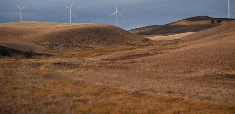 Grassland Management for UplandBirds