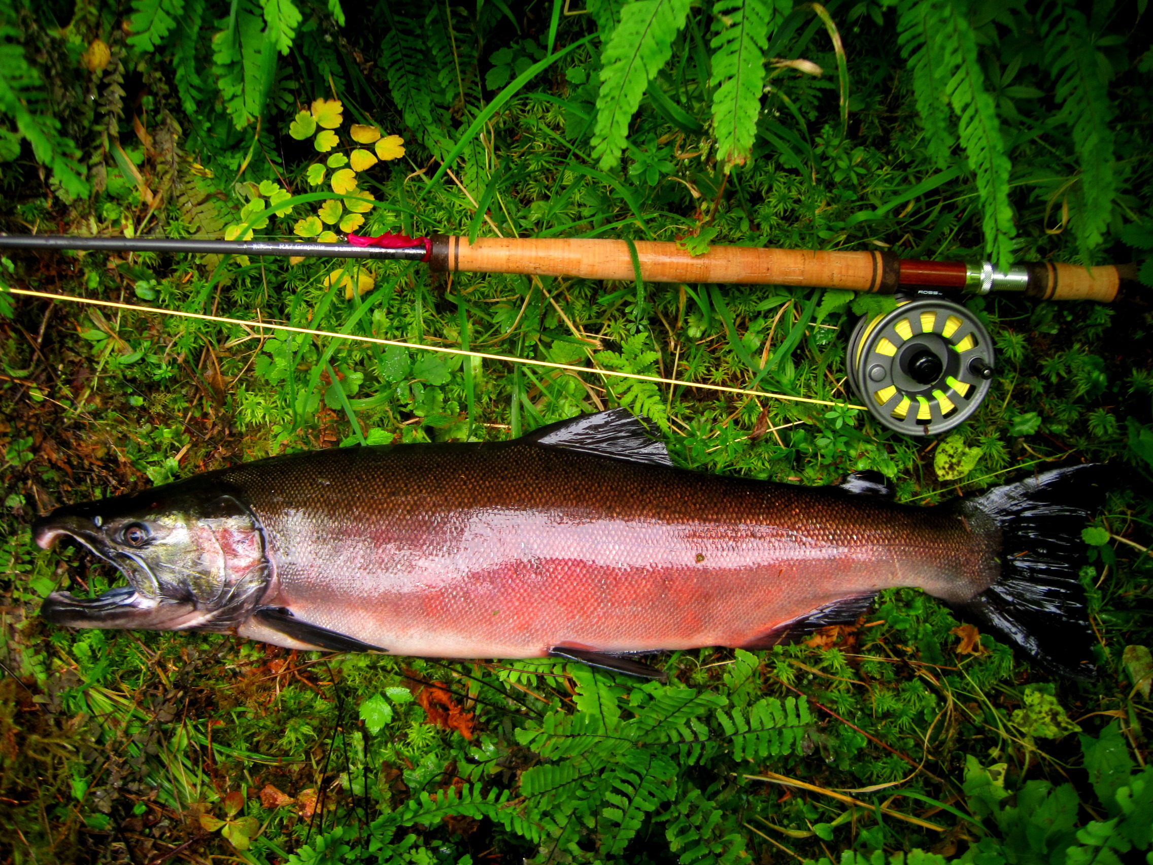 4 Think Pink for Silver Salmon on the Fly (3)