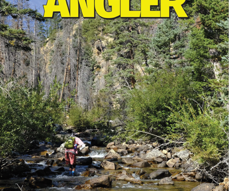 Oncorhynchus mykiss aguabonita: The Marvel of the High Sierras