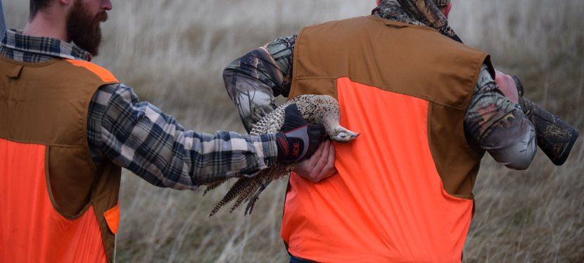 Pheasants Forever Hosts First Fundraiser Hunt Test at Clyde Preserve
