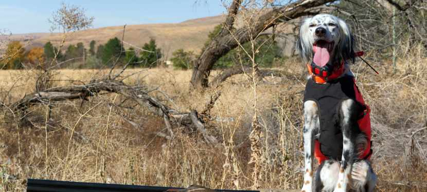 Can Hunting Keep usHuman?