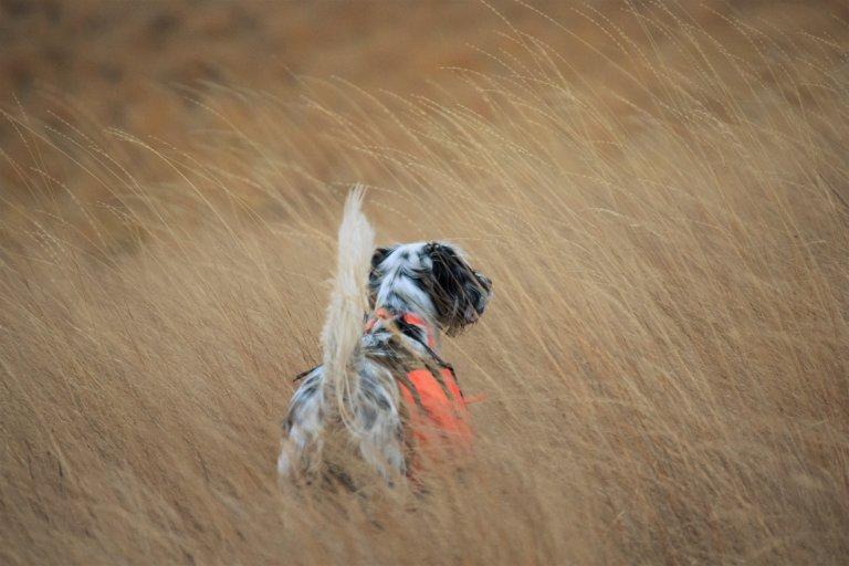 Trumbo - Just Follow the Dog (2)