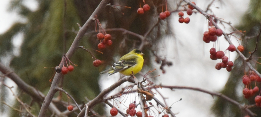 Winter Birding Brings Nature to All