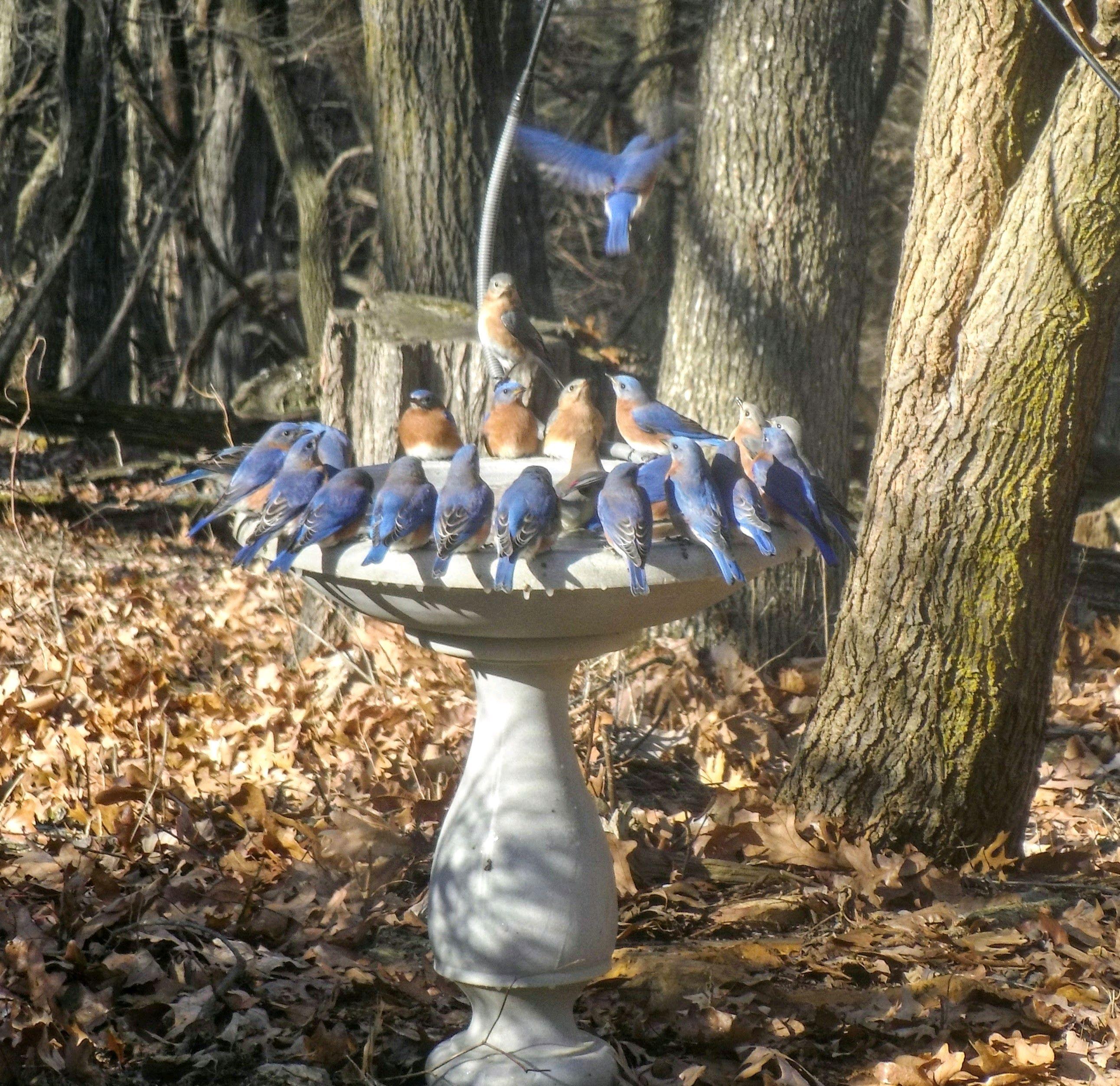 Trumbo- Winter Birding (6)