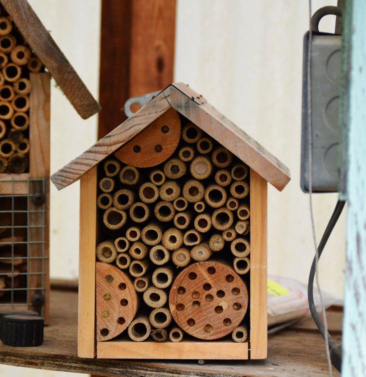Trumbo - mason bee house