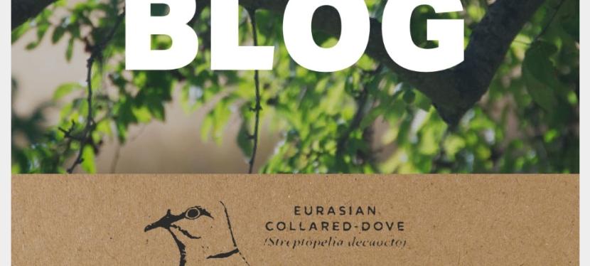 In Pursuit of the Eurasian CollaredDove