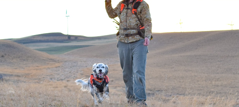 Upland Pursuits – Short Hunts for Sunset Roosters