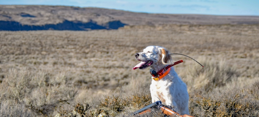 Upland Pursuits: Regret, Relief and Reflection at Season'sEnd
