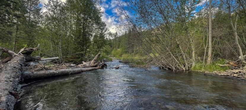 Three Keys to Mountain StreamTrout