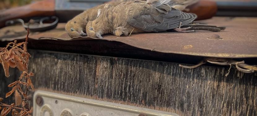Upland Pursuits – Dove Decoys Enhance theHunt
